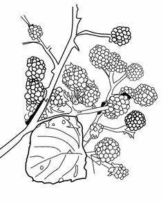 Dessin de bleuet recherche google bachelor buttons cornflowers pinterest dessin - Coloriage fleur bleuet ...