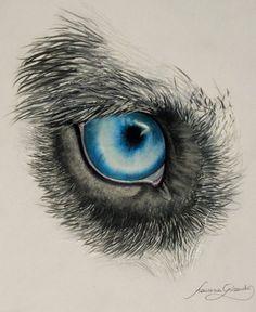husky eye by VelenoRosso9.deviantart.com on @DeviantArt