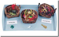 Vertebrate/Invertebrate sorting