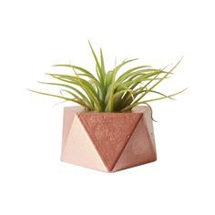 Mini Prism Planter | https://dotandbo.com  home decor store