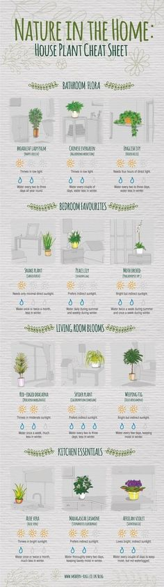 plant tips