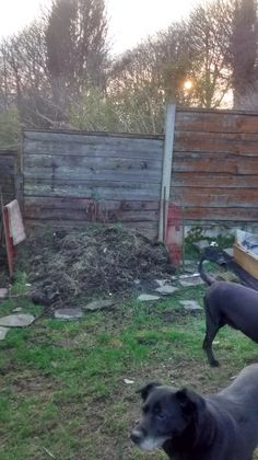 The compost heap is growing, what we'll do with the smelly mess I;m not sure yet but I;m sure I;ll find out soon.  Yes and the pups joined in with the fun 19/03/2015