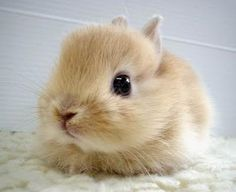 I remember when we had cute baby bunnies just like this.  Awww. :)