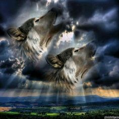 Wolves and Native Americans spirit Native American Wolf, Native American Pictures, American Indian Art, American Indians, Wolf Photos, Wolf Pictures, Beautiful Wolves, Animals Beautiful, Indian Wolf
