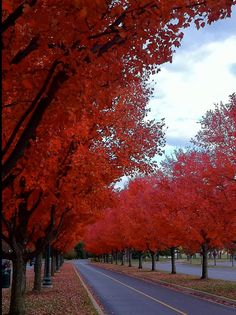 Autumn Lexington Kentucky