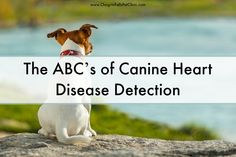 A blood test is now available that can identify which dogs and cats are at greatest risk for heart disease and heart failure!