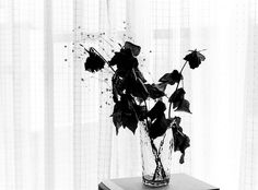 dead roses -B, via Flickr.
