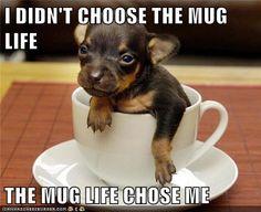 awww that is cute