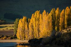 Ich habe mal gelesen, in Neuseeland gebe es keinen richtigen Herbst mit bunten Bäumen und fallendem Laub. Das muss ich jetzt mal richtigstellen. Bunt, Painting, Middle Earth, New Zealand, Autumn, Viajes, Painting Art, Paintings