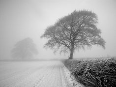 Winter Tree - These are amazing pictures.