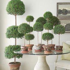 Topiary Garden, Boxwood Topiary, Topiary Trees, Topiary Plants, Arte Floral, Terrariums, Myrtle, Garden Inspiration, Houseplants