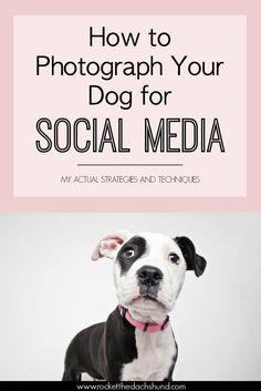 Pinterest pin for how to photograph your dog for social media