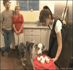 Dog Harness Funny Gif #7771 - Funny Dog Gifs  Funny Gifs  Dog Gifs