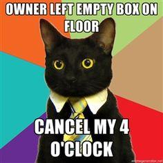 Business Cat - Owner left empty box on floor Cancel my 4 o'clock
