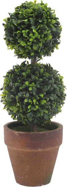 Double Ball Topiary in Pot