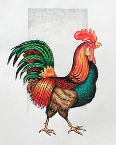 Pics For > Rooster Drawings