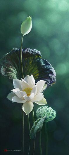 每个人的心中都有一朵清静的莲花。澄净的眼...