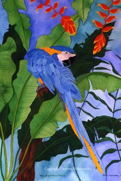 Oenone Hammersley   WATERCOLOR and GOUACHE  Blue & Gold Macaw preening