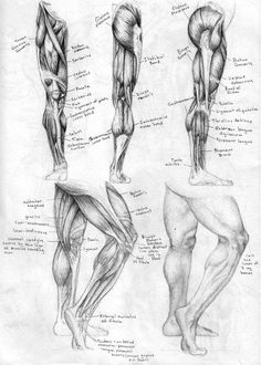 legs sketches | Leg Sketch Learn the leg muscles and