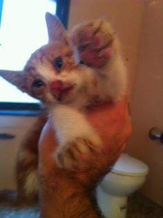LILO - Gato adoptado - AsoKa el Grande
