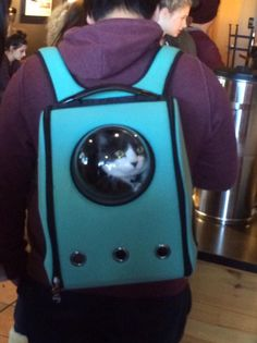 Cats don't mind traveling with you as long as they can pretend to be astronauts. | 15 Things You Never Noticed About Owning A Cat