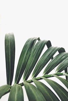Palm frond in a dark sage shade