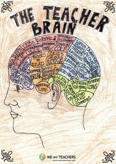 A Peek Inside the Teacher Brain