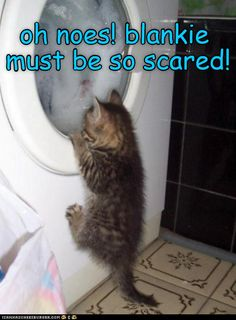 Cat worrying about blankie in tolet scary animals, funny animals, animals and pets, Funny Animal Jokes, Funny Cat Memes, Cute Funny Animals, Funny Animal Pictures, Cute Baby Animals, Cute Cats, Cats Humor, Funny Cats And Dogs, Silly Cats