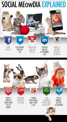 #SocialMedia Cats