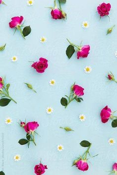 Cute wallpapers, flower wallpapers for iphone, desktop wallpaper summer, blue background wallpapers, Flor Iphone Wallpaper, Desktop Wallpaper Summer, Flower Wallpaper, Screen Wallpaper, Spring Flowers Wallpaper, Summer Backgrounds, Cute Backgrounds, Wallpaper Backgrounds, Vintage Flower Backgrounds