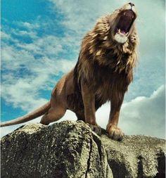 Aslan the Lion - Mery J Kendy Lion Wallpaper, Animal Wallpaper, Images Roi Lion, Aslan Narnia, Lion Tigre, Lion Photography, Lions Photos, Lion Love, Lion Pictures