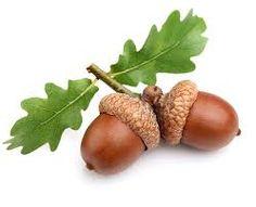 Bilderesultat for acorn