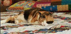 Tritsy Cat | Pawshake Leichhardt