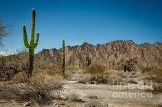 Gila Mountains And Sonoran Desert:  http://fineartamerica.com/profiles/robert-bales.html?tab=artworkgalleries