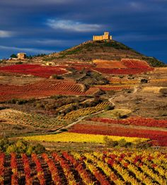 11 Wine Regions You Have To Visit In Europe (9)