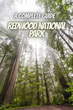 Here is a complete guide to Redwood National Park. state parks usa   redwoods national park road trips   redwood California   California redwood forest   redwood national forest   redwood forest California #RedwoodNationalPark #USAnationalparks #nationalparks #redwoodCalifornia Best National Parks Usa, National Park Camping, National Forest, Redwood Forest California, California California, Crescent City, State Parks, Road Trips, Road Trip