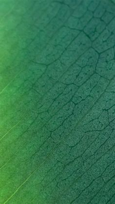 Here's 100 awesome iPhone 6 wallpapers