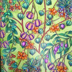 "Deanna T Au on Instagram: ""#scenery #flowers #fauna #adultcoloringbook…"