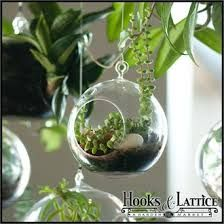 hanging terrariums - Google Search
