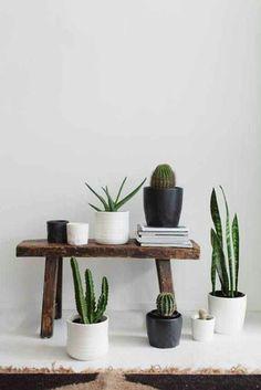 home accessory plants succulents cactus terrarium pot white black brown stool table home decor nice tumblr
