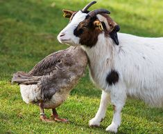 30 Happy Animal Facts That Will Make You Smile Happy Animals, Farm Animals, Animals And Pets, Funny Animals, Cute Animals, Beautiful Creatures, Animals Beautiful, Unlikely Animal Friends, Unusual Animals
