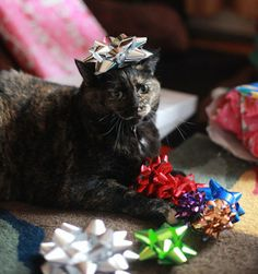 Happy Holidays from Frank and Paws PR!     Photo credit: Jason Putsche Photography