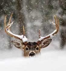 Resultado de imagen de bosque en invierno