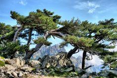 Rond de Col de #Bavella vind je wandelpaden die tot de mooiste van Europa behoren #Corsica