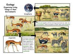 organism, population, community, ecosystem