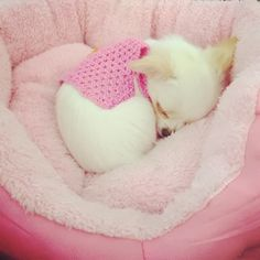 My little chi had this exact  bed...then she started destroying it! lol.