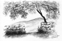 A black and white charcoal drawing of a rural scene with a tree and an open gate in a stone fence. Created by me from my own photo reference. Dimensions: without mat - x matted - x Blossom Tree Tattoo, Pine Tree Tattoo, Tree Of Life Artwork, Sunset Tattoos, Palm Tree Sunset, Hanging Christmas Tree, Stone Fence, Bare Tree, Tree Carving