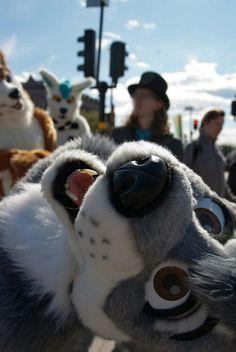 🚫Disclaimer🚫image or fursuit not mine Furry Pics, Furry Art, Animal Costumes, Anime Furry, Anthro Furry, 2d Art, Creatures, Look Alike, Animals