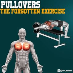 Pullovers the forgotten exercise! This exercises is a great addition to any training routine for a few reasons. However in what day should you add it, back or chest? It has been debated whether the pullover is a lat exercise or a chest one. It does not stop the pullover from being useful in regards to the lats. The pull over provides a great loaded eccentric stretch of the lats as well as the pecs. This can help improve shoulder mobility as the lower fibers of the pec are rarely stretched