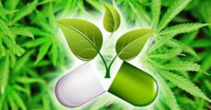 new-cannabis-capsule-effective-that-it-is-replacing-big-pharma-painkillers